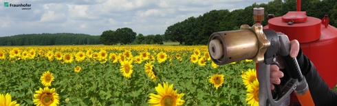 Biofuels from biogenic residues, e.g. sunflower oil (Photo: Fraunhofer UMSICHT)