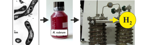 Project RhoTech: Scheme hydrogen-production from fruit and dairy wastes with the help of purple bacteria (source: University Stuttgart, IBBS)